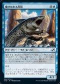 【日本語】飛びかかる岸鮫/Pouncing Shoreshark