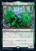 【日本語Foil】集めるもの、ウモーリ/Umori, the Collector