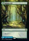 ☆特殊枠【日本語】樹皮路の小道/Barkchannel Pathway