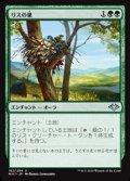【日本語】リスの巣/Squirrel Nest