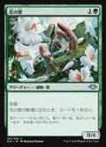 【日本語】花の壁/Wall of Blossoms