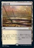 【日本語Foil】湿地の干潟/Marsh Flats