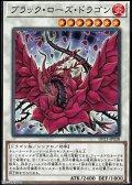 【ノーマル】ブラック・ローズ・ドラゴン