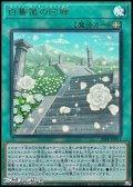 【ウルトラレア】白薔薇の回廊