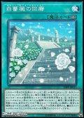 【ノーマル】白薔薇の回廊