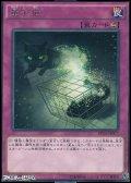 【レア】量子猫